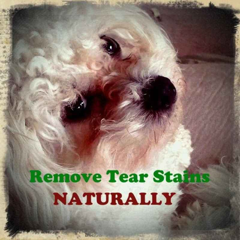 Naturally Remove Tear Stains From