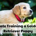 How To Crate Train A Golden Retriever Puppy Pethelpful By Fellow Animal Lovers And Experts