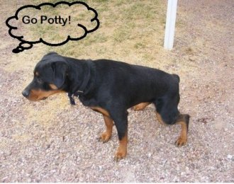 Dog hearing the command to go potty and going to the correct area to potty.
