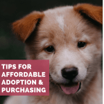 The Best Places To Find A Really Cheap Puppy Pethelpful By Fellow Animal Lovers And Experts