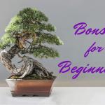 A Beginner S Guide To Bonsai Dengarden Home And Garden