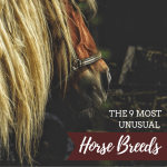 Beautiful Rare And Unusual Horse Breeds Pethelpful By Fellow Animal Lovers And Experts