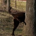 Keep Deer Away From Your Plants And Garden Without Building A Fence Dengarden Home And Garden