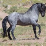 40 Native American Mythological Names For American Horses Pethelpful By Fellow Animal Lovers And Experts