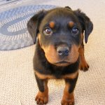 How To Potty Train Your Puppy If You Work All Day Pethelpful By Fellow Animal Lovers And Experts