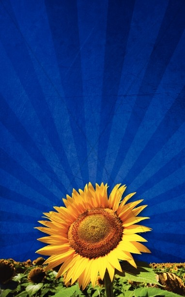 Sunflower Bulletin Cover Hidden
