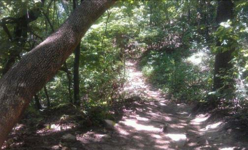 Image result for Turkey Mountain Yellow Trail