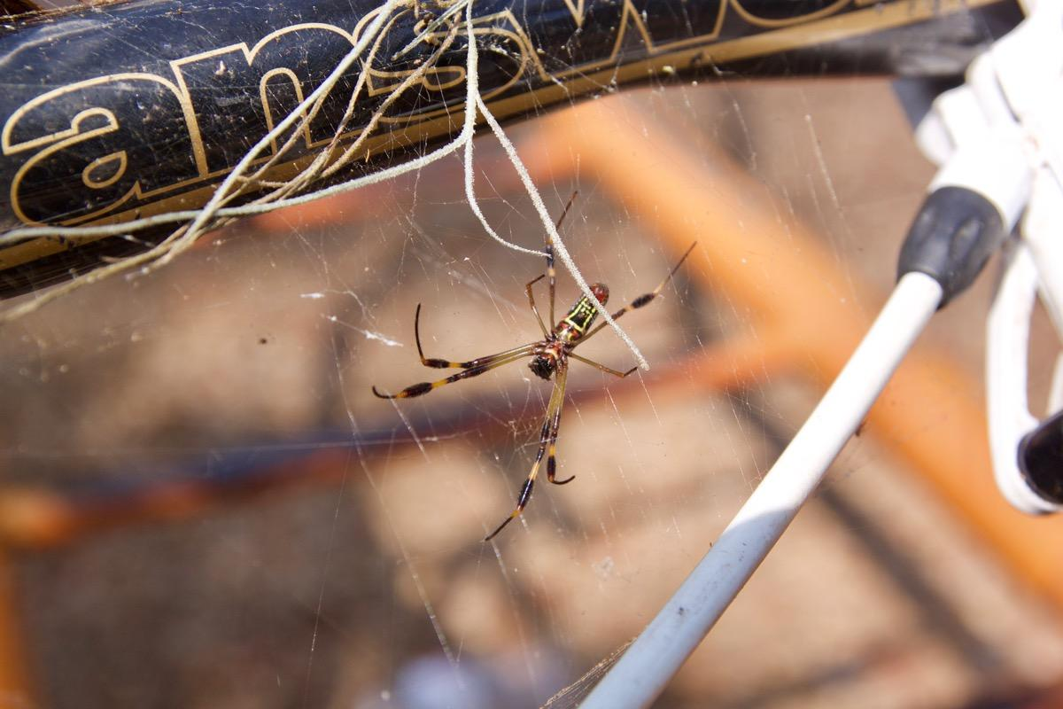 In thinking about the type of cycling that you want to do, if you plan to ride off road. I Hate Spider Webs Singletracks Mountain Bike News