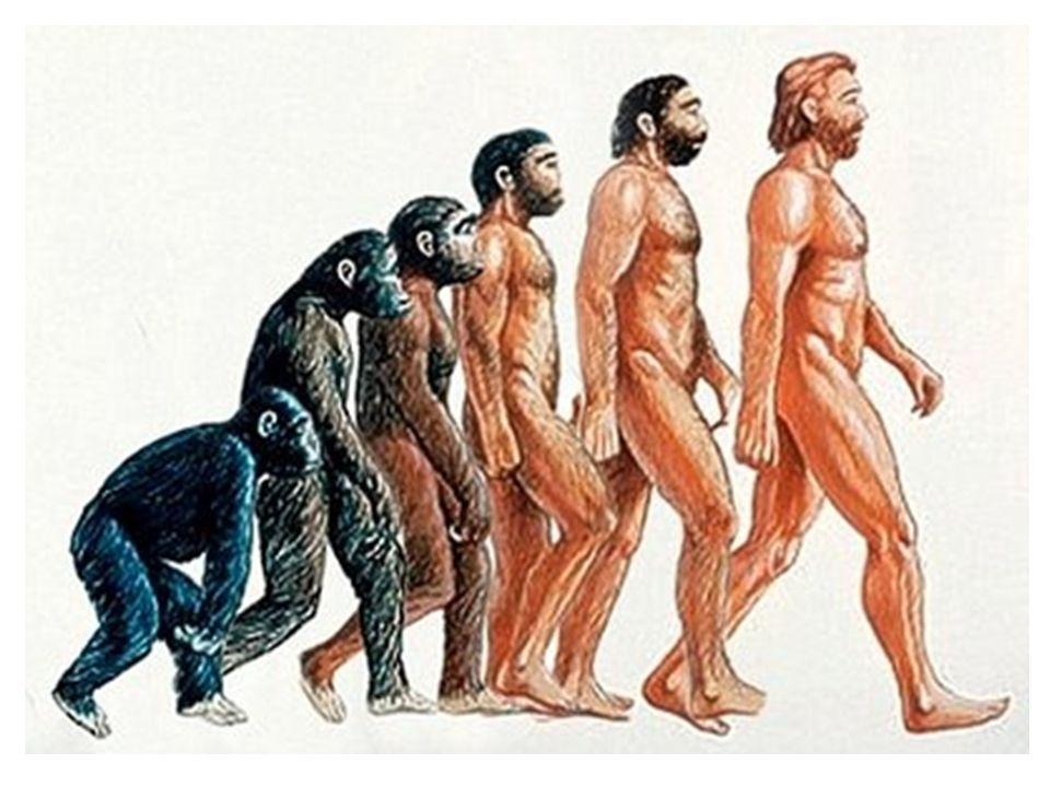Resultado de imagen de teoria de la evolucion