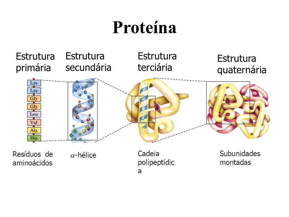 Resultado de imagem para proteína estágio terciário