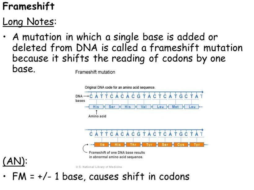 frame shift mutation definition | lajulak.org