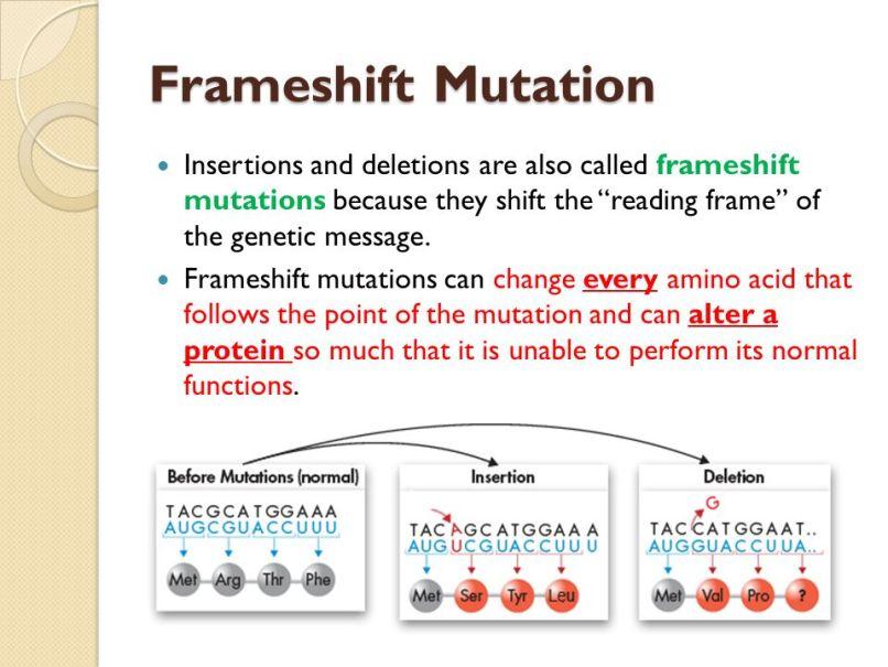 Frameshift Mutation Example | Frameswalls.org