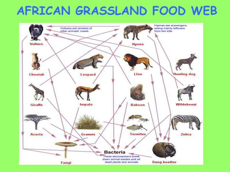 Asian grassland food webs
