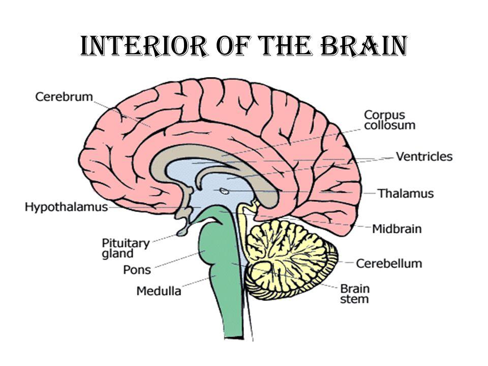 Interior Brain Parts Interior Electronic Wallpaper Electronic