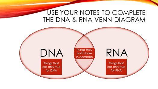 Dna And Rna Venn Diagram Worksheet Periodic Diagrams Science