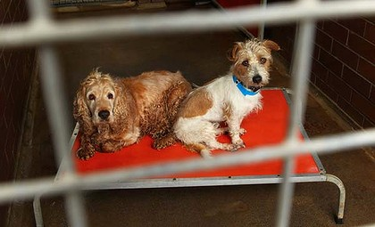 Death-row dogs... unwanted pets at Blacktown Animal Holding Facility.