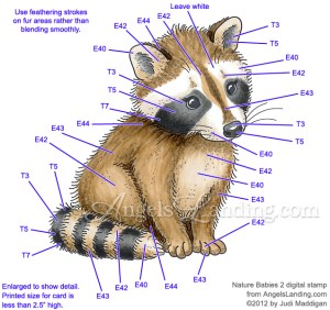 Baby Raccoon Coloring Guide by Crafts  at Splitcoaststampers