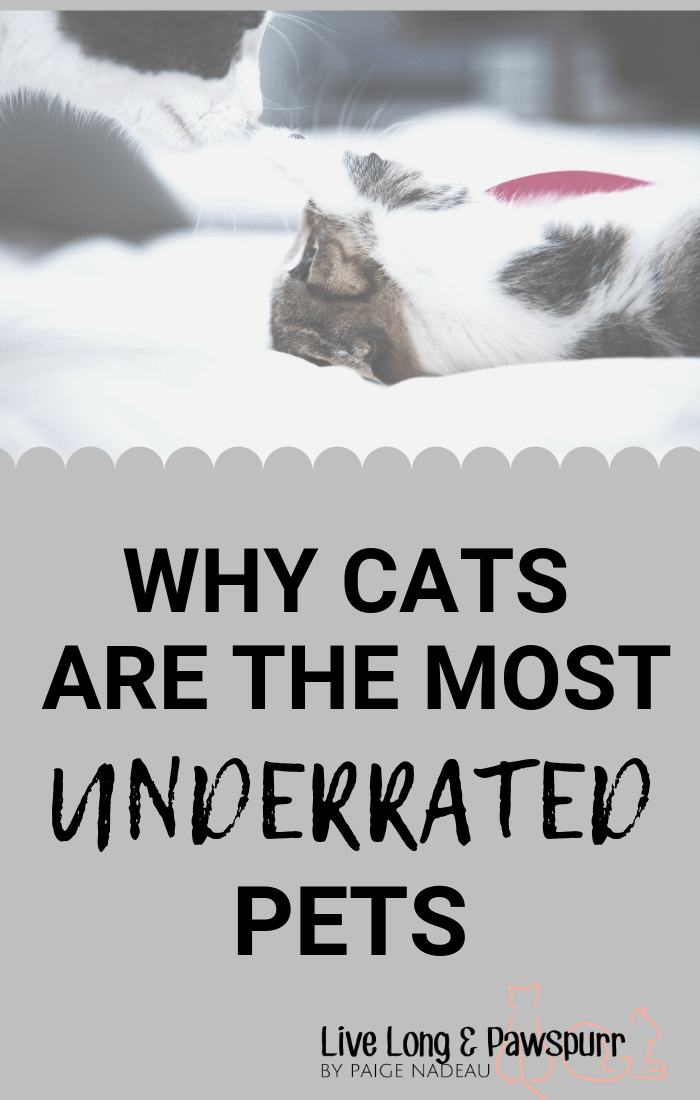 "Why Cats are The Most Under-rated Pets"" class="
