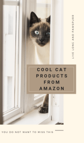 "Cat Products to Buy on Amazon"" class="