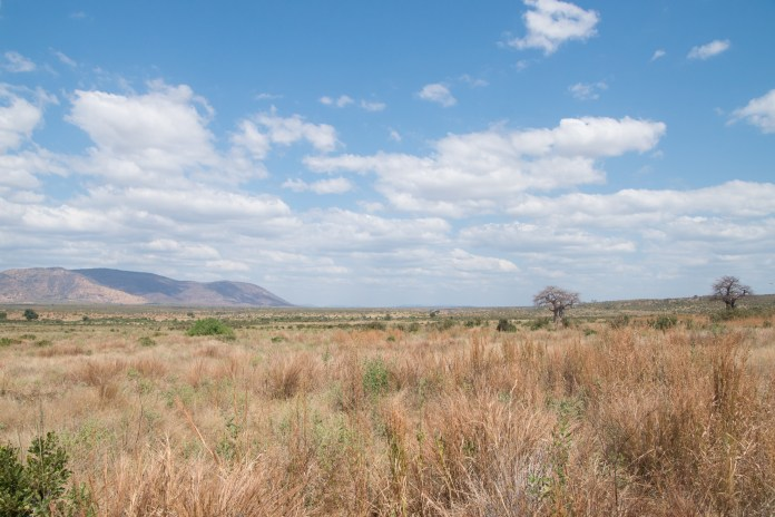A landscape shot of Ruaha national park. Ruaha stretches across more than 7,809 square miles. (Amar Batra/Daily Campus)