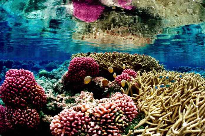 An underwater landscape of a coral reef from March 1, 2013. (Jim E. Maragos/Wikimedia Commons/Creative Commons)