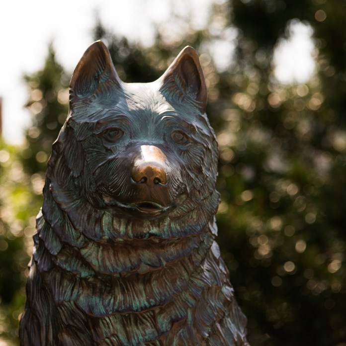 The Jonathan the Husky statue is an iconic part of campus and an integral part of many college memories. (Amar Batra/The Daily Campus)