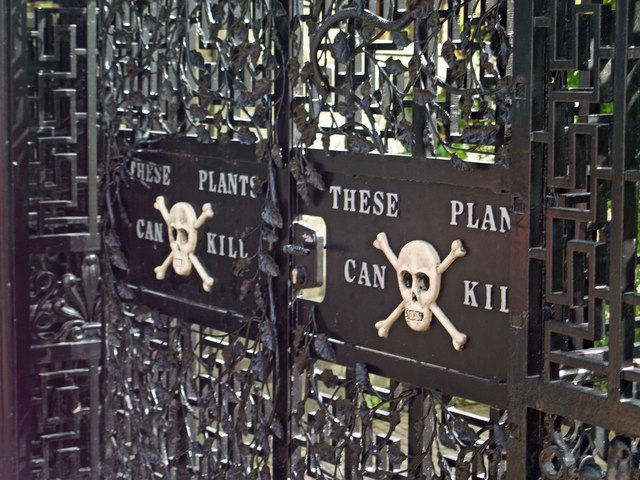 Every single vine, leaf, blossom and stem in the Alnwick Poison Garden is (as you'd guess) highly toxic. Even a whiff, according to the tour guides, can spell doom, so visitors are warned to keep their distance. ( Steve F /Wikimedia Creative Commons)