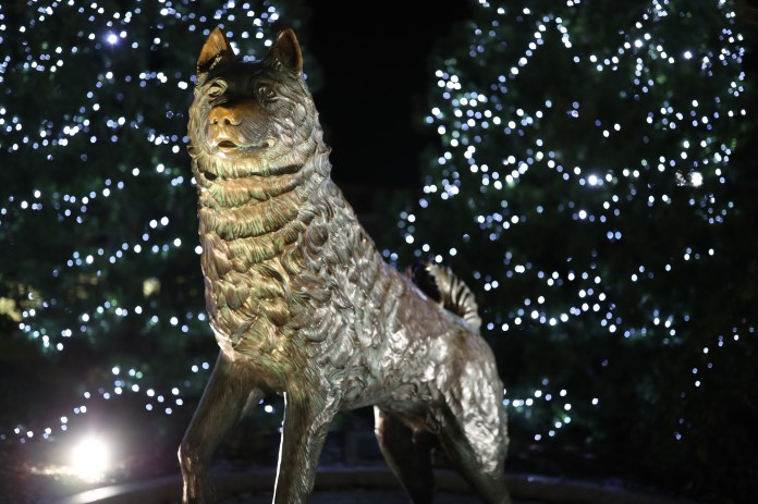 The statue of Jonathan the Husky in Wolff Family Park stands with prowess illuminated by the Christmas lights on the surrounding trees on Monday, Nov. 28, 2016.(Owen Bonaventura/The Daily Campus)