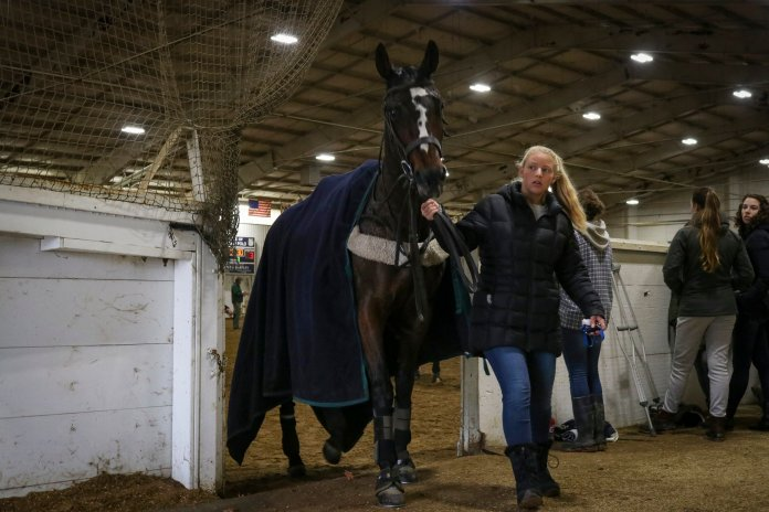 Between periods, horses that have played are taken outside and walked to cool down while other horses are warmed up to potentially take their places.