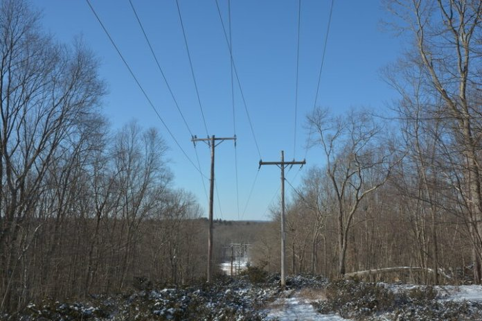 David Wagner, a professor of ecology and evolutionary biology at the University of Connecticut, and his team of researchers have found that some power line corridors in New England are better habitats to certain wildlife than forested areas nearby.  File Photo /The Daily Campus