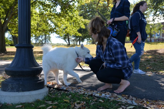 Jonathan XIII is recuperating nicely after having clusters of seizures. Alpha Phi Omega created a GoFundMe page to offset the cost of Jonathan XIII treatment at Pieper Memorial Veterinary Hospital.  File Photo/The Daily Campus