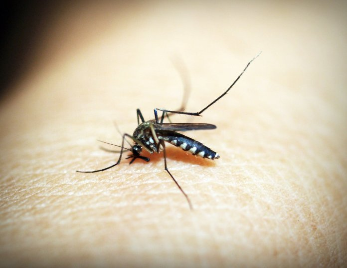 This past week, the Connecticut Department of Public Health (DPH) reported that the threat of acquiring Eastern Equine Encephalitis (EEE), has been greatly reduced. EEE virus is spread through mosquitoes that carry and then infect humans with it.  Photo by Icon0.com from Pexels.com