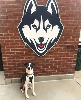 Julia Trafaconda has an emotional assistance dog named Thor.  Photo provided by Julia Trafaconda