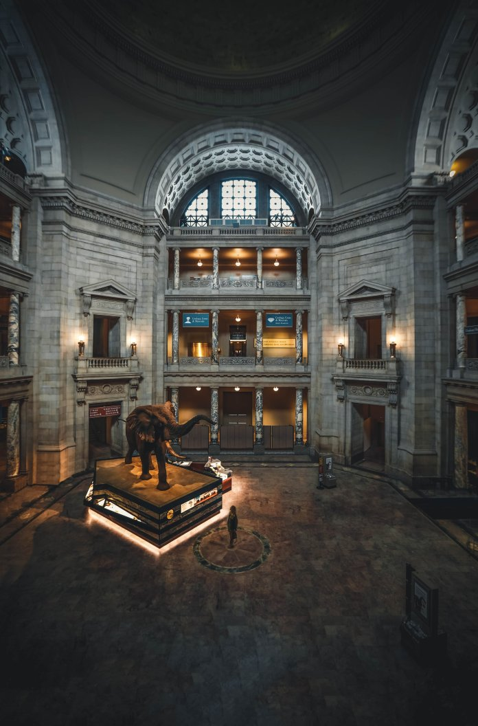 The Smithsonian is another incredible museum with a plethora of virtual tours to explore while at home.  Photo by    Roberto Nickson    on    Unsplash   .