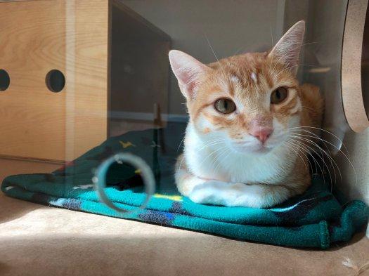 Seattle Humane Cat.jpg