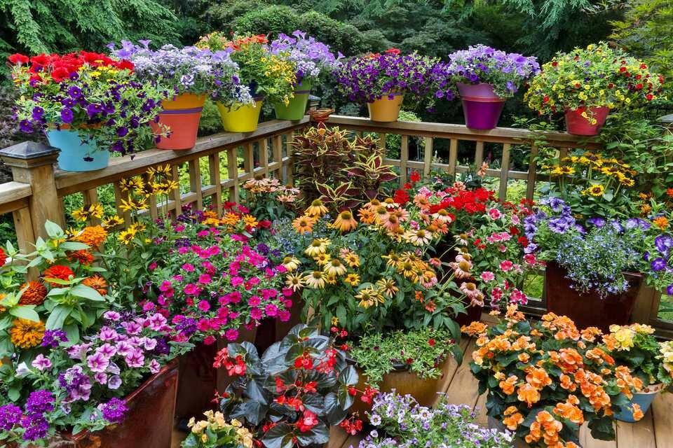 Dreaming Of Gardening Container Gardening Ideas Harvest