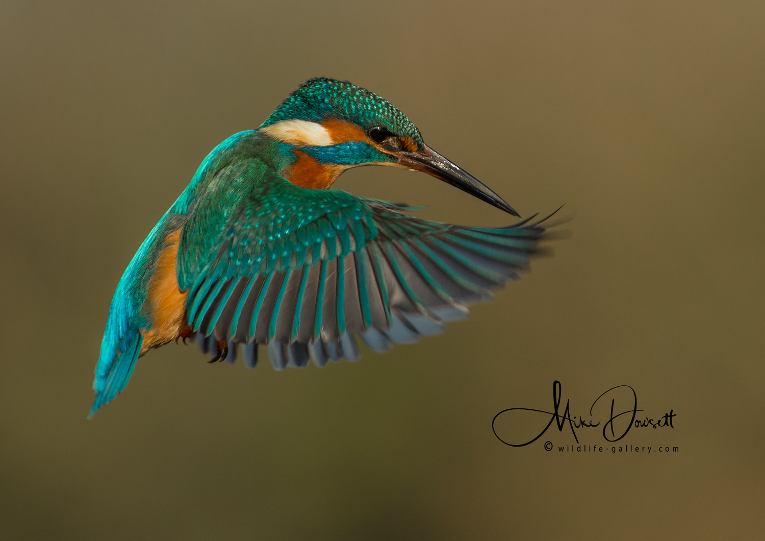 Wildlife Gallery Incredible Kingfisher Photos