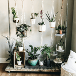 House Plants Decor Ideas First Thyme Mom