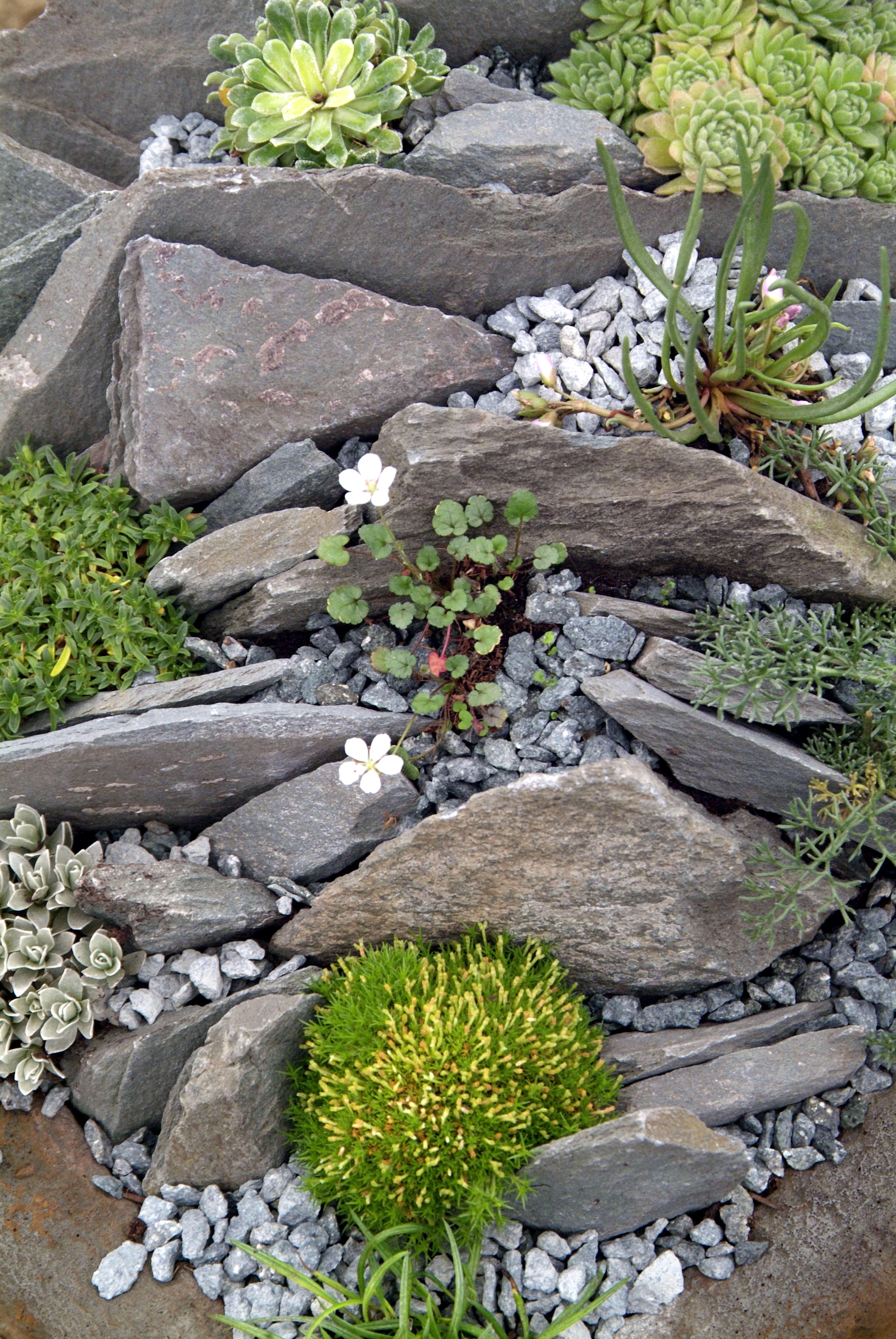 Rediscover The Rockery Garden Answers