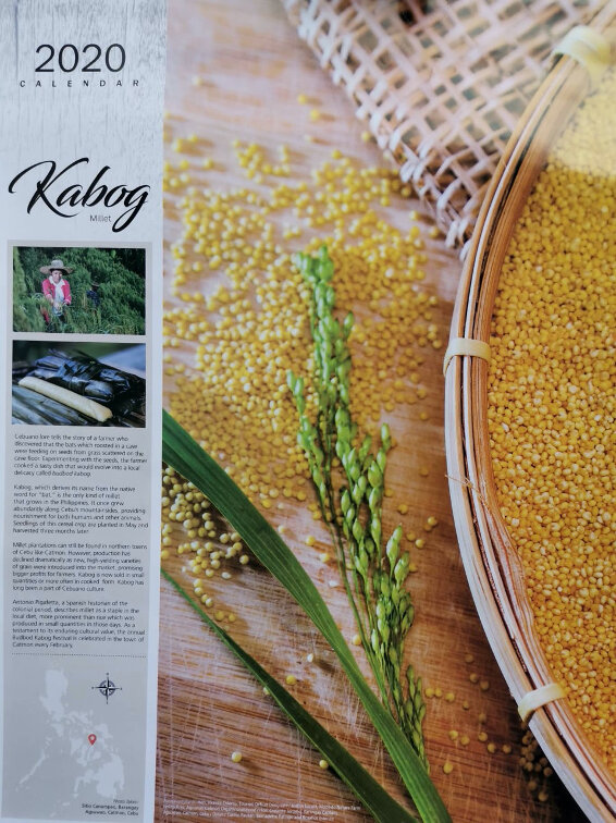 """A photo featuring the kabog millet in the 2020 Calendar of the Landbank of the Philippines with the theme """"Precious and Few"""". The 2020 Calendar highlights the Philippines' heirloom plants that are in danger of becoming extinct. Minority cultures that grow them are losing their lands and way of life; echoing the reality that these crops have become precious and few (Photo: Teresa D. Ruelas)."""