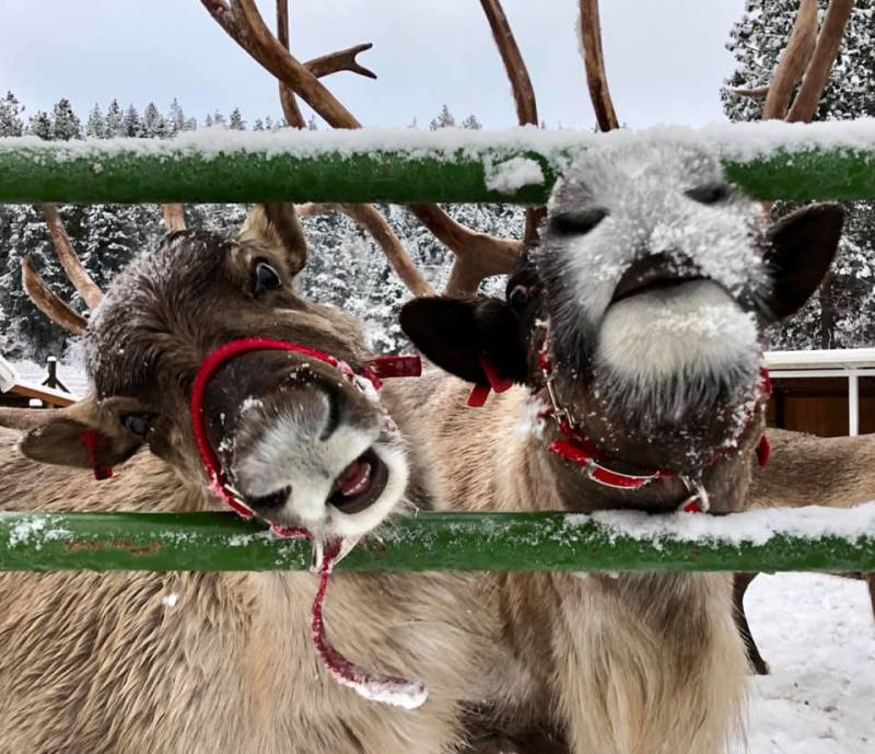 Image result for leavenworth reindeer farm