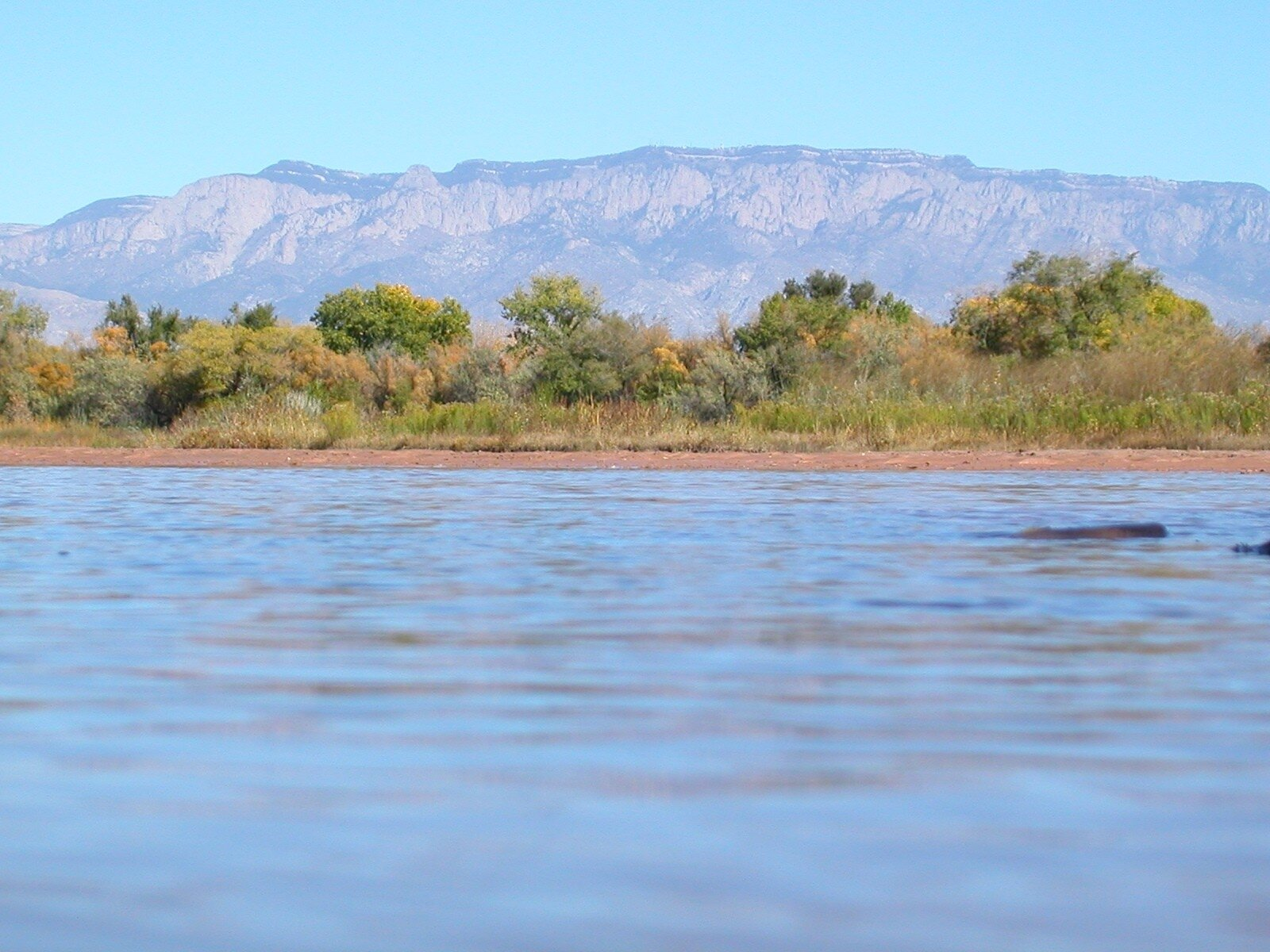 Sandia Crest as seen from the Rio Grande's protected riparian bosque. (photo by Matt Schmader)