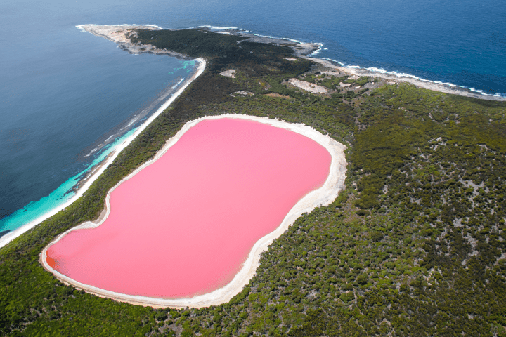 Image result for pink lake in australia