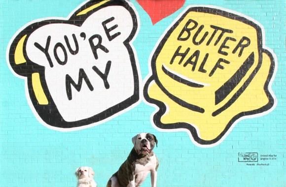 Our Favorite Austin Dog Companies — Dogs Around Austin