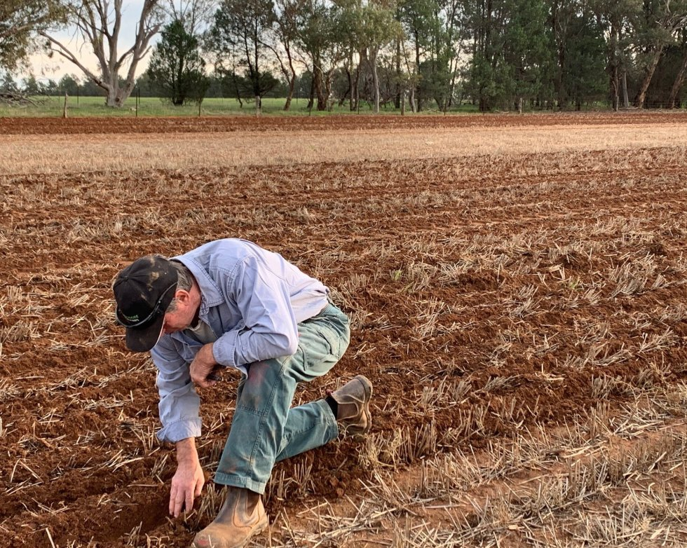 6 May 2020 - Gary Drew (co-founder of Lupins For Life) checking the depth of the newly sown seeds.