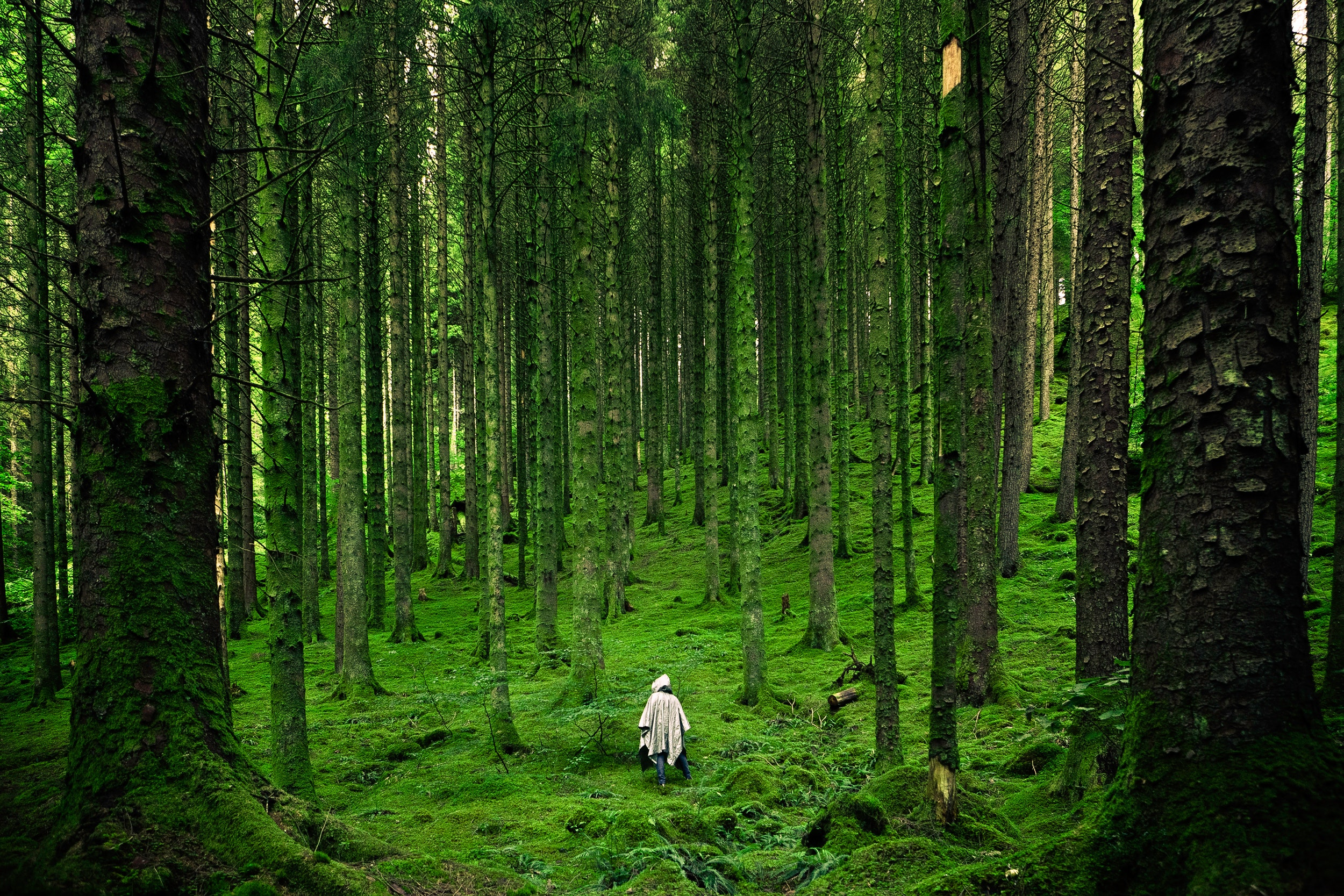 dense forest achievement in biped. A Clearing In The Dense Forest Of Your Life A Mindfulness And Loving Kindness Retreat Hugh Byrne