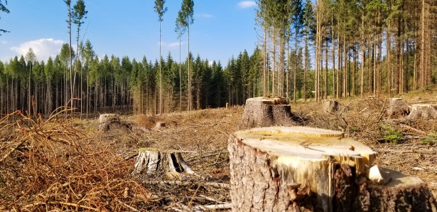 Thus, deforestation is an important issue to be discussed. Helping To Mitigate The Impact Of Deforestation In Our World Donegan S Tree Service Leesburg Loudoun County Marshall And The Plains Virginia