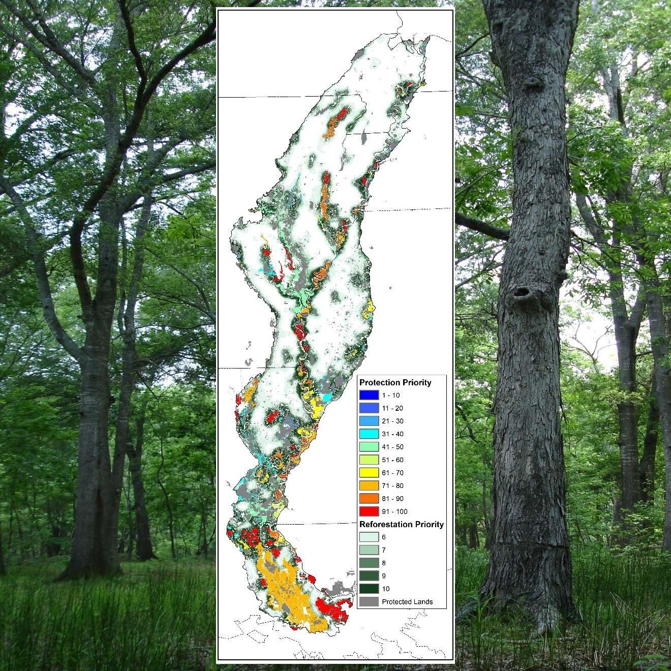 Northern hardwood forests of upstate new york. Landbird Plans Lmvjv