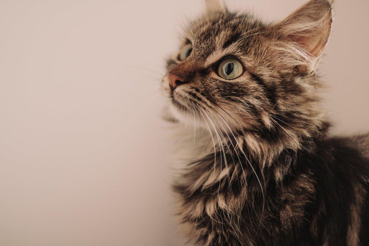 how big is a 7 week old kitten?