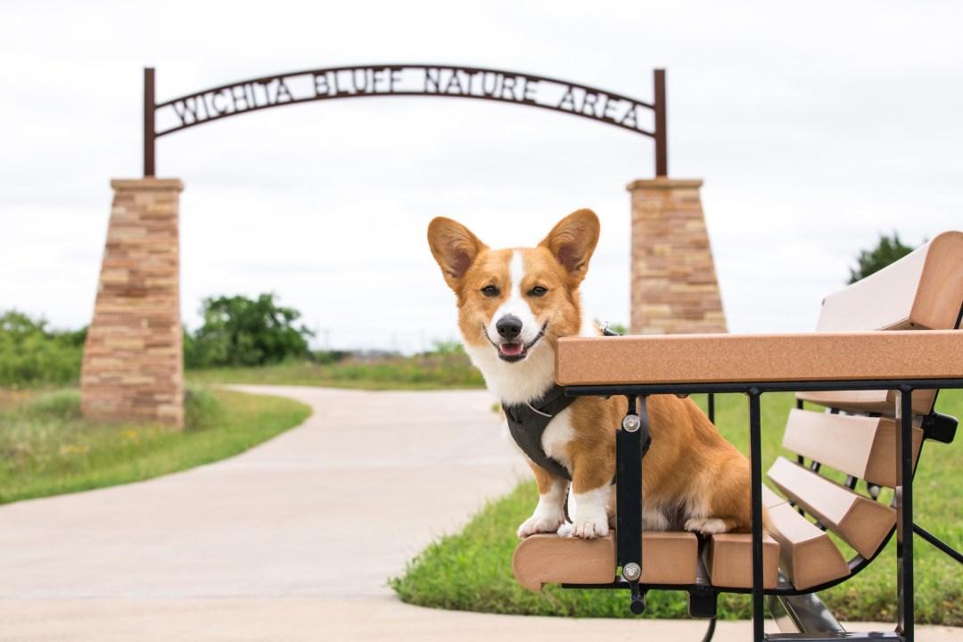 Wichita bluff nature area Wichita Falls dog friendly.jpg